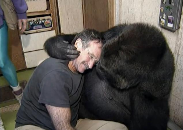 Robin Williams and Koko the gorilla. Click for video on YouTube. It fills me with happiness and deep sorrow at the same time.